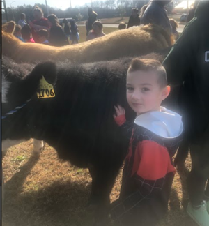 Cole with cow